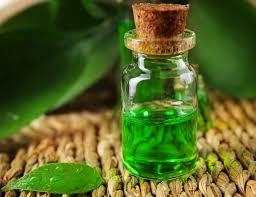 Tinh dầu trà xanh trong chăm sóc sức khỏe